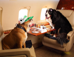 Vegas Express Jet is Pet Friendly, please share your needs